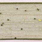 Cypress Colour 980 - Random Glitter Wired Berisfords 15mm Ribbon